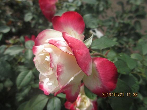 IMG_c3352.jpg